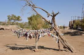 sacred saxaul tree with cloth prayer strips photo brian mcmorrow