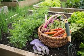 low light outdoor plants the easiest 10 vegetables to grow
