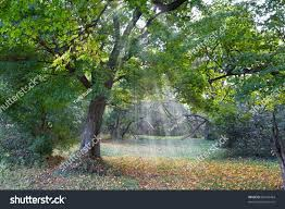 forest glade oak forest glade rays sun stock photo 86765464 shutterstock