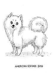 is a american eskimo dog right for me 8 best american eskimo dog images on pinterest american eskimo