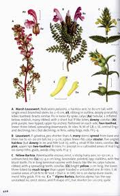 plants native to ireland tools of the extreme botanists trade 3 plant identification