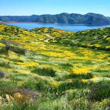 where to catch the wildflower super bloom 2017 in southern california