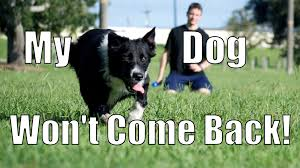 my dog takes off and won u0027t come back how to train your dog youtube