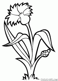 coloring page cornflower