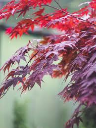 japan photo essay garden crossed heart forge