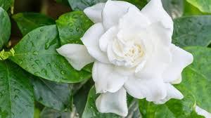 heat loving plants homelife plant guide heat tolerant flowers