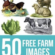 farm animals archives the graphics fairy