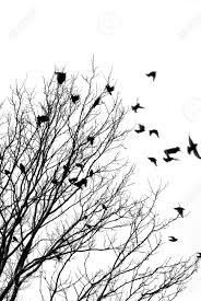 black and white image of birds flying a tree stock photo