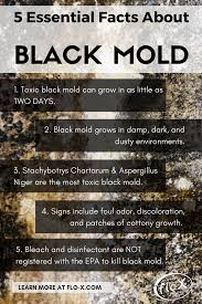 incridible what can black mold do to you at interesting black mold