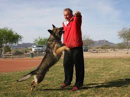 belgian sheepdog breeders pa andreas mueller dog trainer in tucson arizona zauberberg