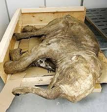subconscience woolly mammoth resurrection