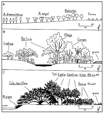 tsetse biology systematics and distribution techniques