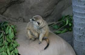 san diego zoo san diego zoo tickets sandiego