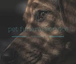 Dog Burial Backyard Pet Funeral Service U2013 Funeral Com