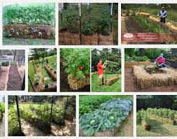 the hidden danger of straw bale gardening no one is mentioning