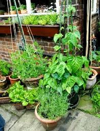 patio vegetable garden container gardening with vegetables and