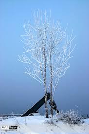 frosty tree keith international photography