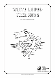 white lipped tree frog coloring page cool coloring pages