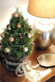 cheap christmas trees miniature christmas trees hrcouncil info
