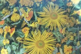 Dry Flowers Preserving Flowers Six Ways Of Drying Flowers Feltmagnet