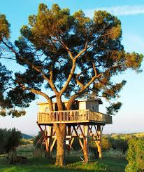Tree Houses Around The World Located In This Majestic Pine Tree The Patio Tree House Is The