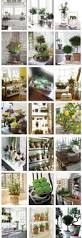 9 best images about indoor plant decor on pinterest eclectic