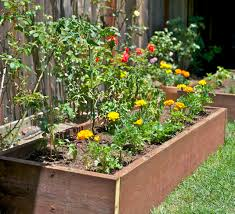grow vegetables in your backyard 5 steps with pictures