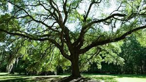 8 trees just wide enough to conceal daniel craig clickhole