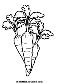 carrot coloring pages eliolera com