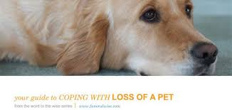 coping with loss of pet request our guide to coping with pet loss funeralwise