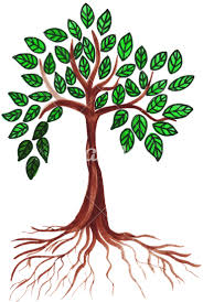 hand drawing of a tree photos by canva