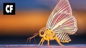 joakim karud butterfly feat jeff kaale