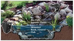 Pond In Backyard by Components Of An Ecosystem Pond Premier Ponds Dc Md Va