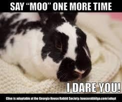 Moo Meme - rabbit ramblings funny bunny memes
