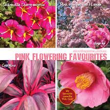 best pink flowering plants in australiaabout the garden magazine