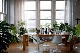 25 Easy Houseplants Easy To by Top 5 House Plants That Are Easy To Maintain And Improve Air