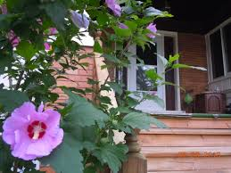 how to improve the outside feng shui of your house u2013 by rodika