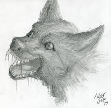 wolf pencil drawing by cavyspirit on deviantart