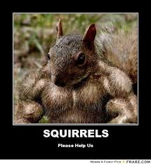 Please Memes - funny squirrel memes