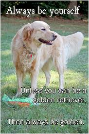 Golden Retriever Meme - always be yourself go do be dog