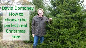 how to choose the perfect real christmas tree david domoney