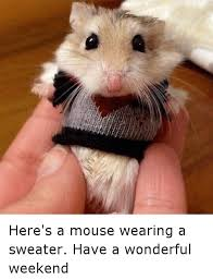 Funny Weekend Meme - here s a mouse wearing a sweater have a wonderful weekend funny
