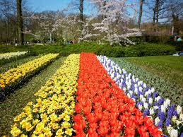 best 25 tulip garden amsterdam ideas only on dutch ideas 43