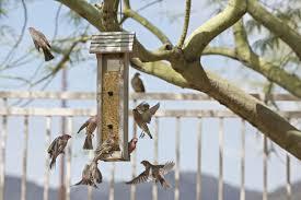 attracting birds celebrate urban birds