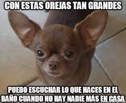 Memes De Chihuahua - cuánto cabrón búsqueda de chihuahua en cuantocabron com