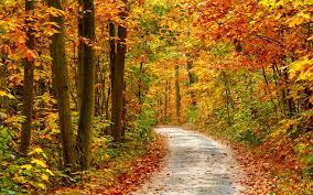 imagenes de otoño para fondo de escritorio autumn full hd fondo de pantalla and fondo de escritorio 1920x1200