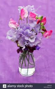 Flowers Glass Vase Lathyrus Odoratus Sweet Pea Flowers In A Glass Vase Against A
