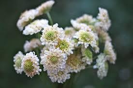 Ashland Flowers - flowers for weddings ashland or petal u0026 seed