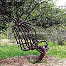 get cheap trees ornamental plants aliexpress alibaba