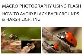 Harsh Lighting Macro Photography Using Flash U2013 How To Avoid Black Backgrounds